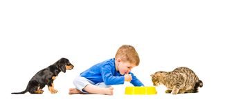 Little cute boy eats with his cat and dog. Isolated on white background stock photo