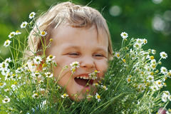 Little cute boy holding a bouquet of daisies royalty free stock photos