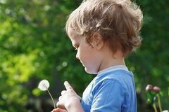 Little cute boy holding a dandelion Stock Images