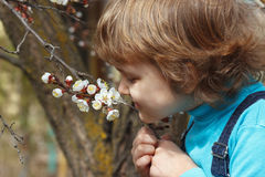 Little cute boy holding the flowers blooming apricot outdoors Stock Photos