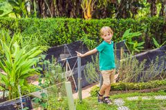 Little cute boy in organic bio vegetable garden royalty free stock photography