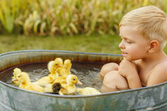 Little cute boy play with duckling in the hands on a bright back Royalty Free Stock Image