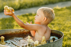 Little cute boy play with duckling in the hands on a bright back Stock Images