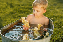 Little cute boy play with duckling in the hands on a bright back Stock Image