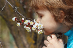 Little cute boy sniffing the flowers blooming apricot Royalty Free Stock Images