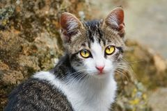 Little cute cat looking street Stock Photography