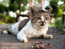 A little cute cat lying on the ground royalty free stock images