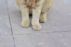 little cute cat sit on concrete floor by paw in holidays Royalty Free Stock Photo