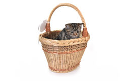 Little cute cat Royalty Free Stock Image