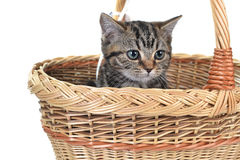 Little cute cat Stock Photo