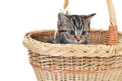 Little cute cat Stock Images