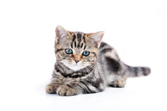 Little cute cat Royalty Free Stock Photos