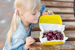 Little cute caucasian blond girl looking at lunchbox with fresh tasty sweet cherries on wooden table outdoors.Kid going to eat swe. Little cute caucasian blond royalty free stock image