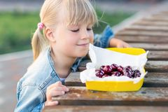 Little cute caucasian blond girl looking at lunchbox with fresh tasty sweet cherries on wooden table outdoors.Kid going to eat swe. Little cute caucasian blond stock photo