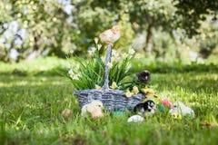 Little cute chicks Stock Photo