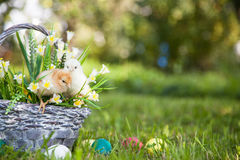 Little cute chicks Stock Images