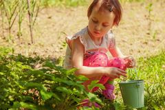 Little cute child girl having fun on strawberry farm in summer. Child eating healthy organic food, fresh berries