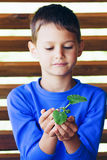 Little cute child holding green plant in hands. Little cute boy holding green plant in hands Royalty Free Stock Photo