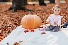 Little cute child in park on yellow leaf with pumpkin in autumn stock images