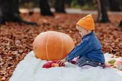 Little cute child in park on yellow leaf with pumpkin in autumn stock photos