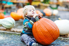 Little cute child sitting with huge pumpkin on halloween or than Royalty Free Stock Photography