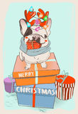 Little cute christmas bulldog  Stock Photo