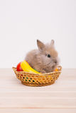 Little cute decorative rabbits. 
