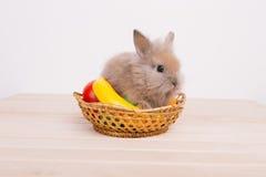 Little cute decorative rabbits Stock Photography