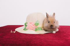 Little cute decorative rabbits Royalty Free Stock Images