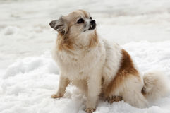 Cute vamp doggy Stock Images