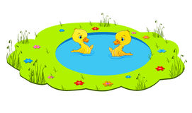 Little cute duckling Royalty Free Stock Image