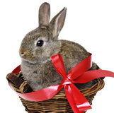 Little cute easter rabbit Royalty Free Stock Photos