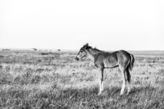 Little cute foal standing on the pasture, rural landscape stock images