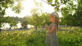 A little European girl blows fluffy seeds from a white dandelion. Little cute girl dressed in a gray dress and a hat blows fluffy seeds from a dandelion. Side stock video