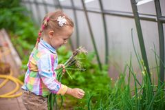 Little cute girl with the harvest in a greenhouse Stock Photo