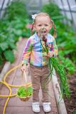 Little cute girl with the harvest in a greenhouse Royalty Free Stock Image