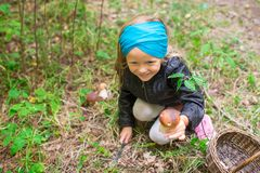 Little cute girl pick up mushrooms in the forest Royalty Free Stock Photography