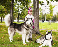 Little cute girl playing with husky dog outside in green park Stock Photography