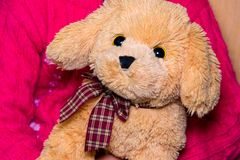 little cute girl plays with a soft toy, the concept of childhood and children royalty free stock image