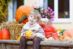 Little cute kid boy sitting with different pumpkins on halloween Royalty Free Stock Photo