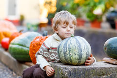 Little cute kid boy sitting with huge pumpkin on halloween or th Royalty Free Stock Image