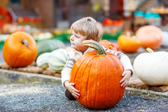 Little cute kid boy sitting with huge pumpkin on halloween or th Stock Photography