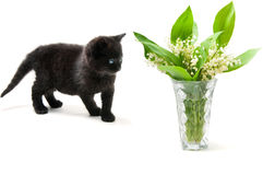 Little cute kitten Royalty Free Stock Photos