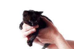 Little cute kitten Stock Images