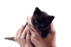 Little cute kitten Stock Photos