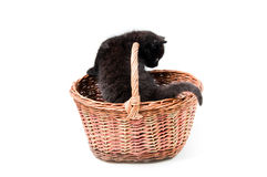 Little cute kitten in basket Royalty Free Stock Photo