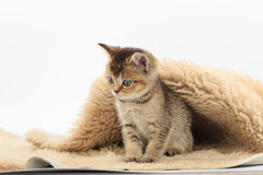 Little cute kitten on a fur litter on a white background royalty free stock photography