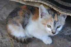 Little cute kitten Royalty Free Stock Photos