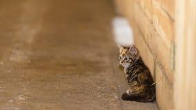 Little cute kitten kitty cat pet animal. Royalty Free Stock Photography
