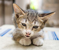 Little cute kitten lay on outdoor corridor Royalty Free Stock Images